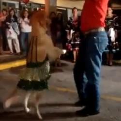 Dansende Hond