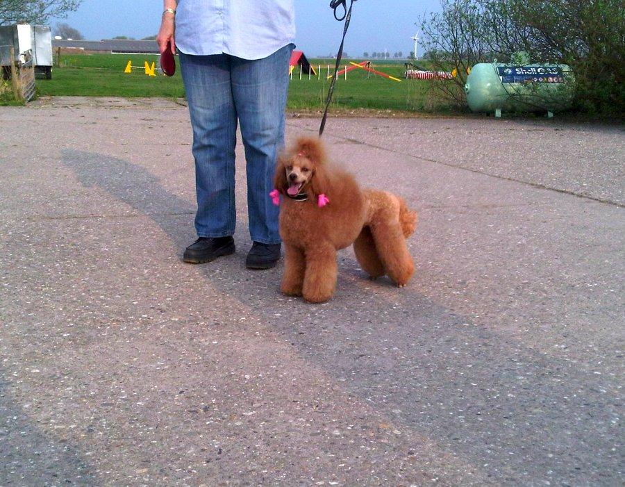de-honden-van-agouti-5