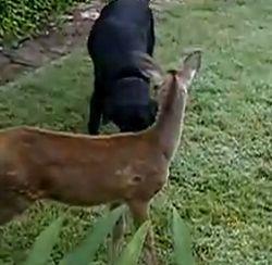 Hond en het hertje