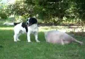 De Hond en zijn nieuwe vriendje