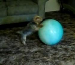 Het hondje en de groene bal